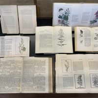 View of the herb books in Case #1